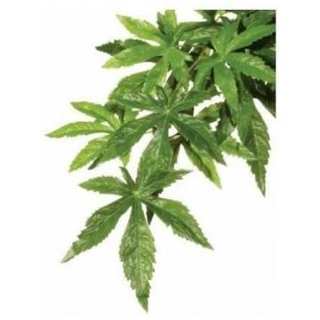 Planta decorativa para Terrarios Ambuliton Exo Terra