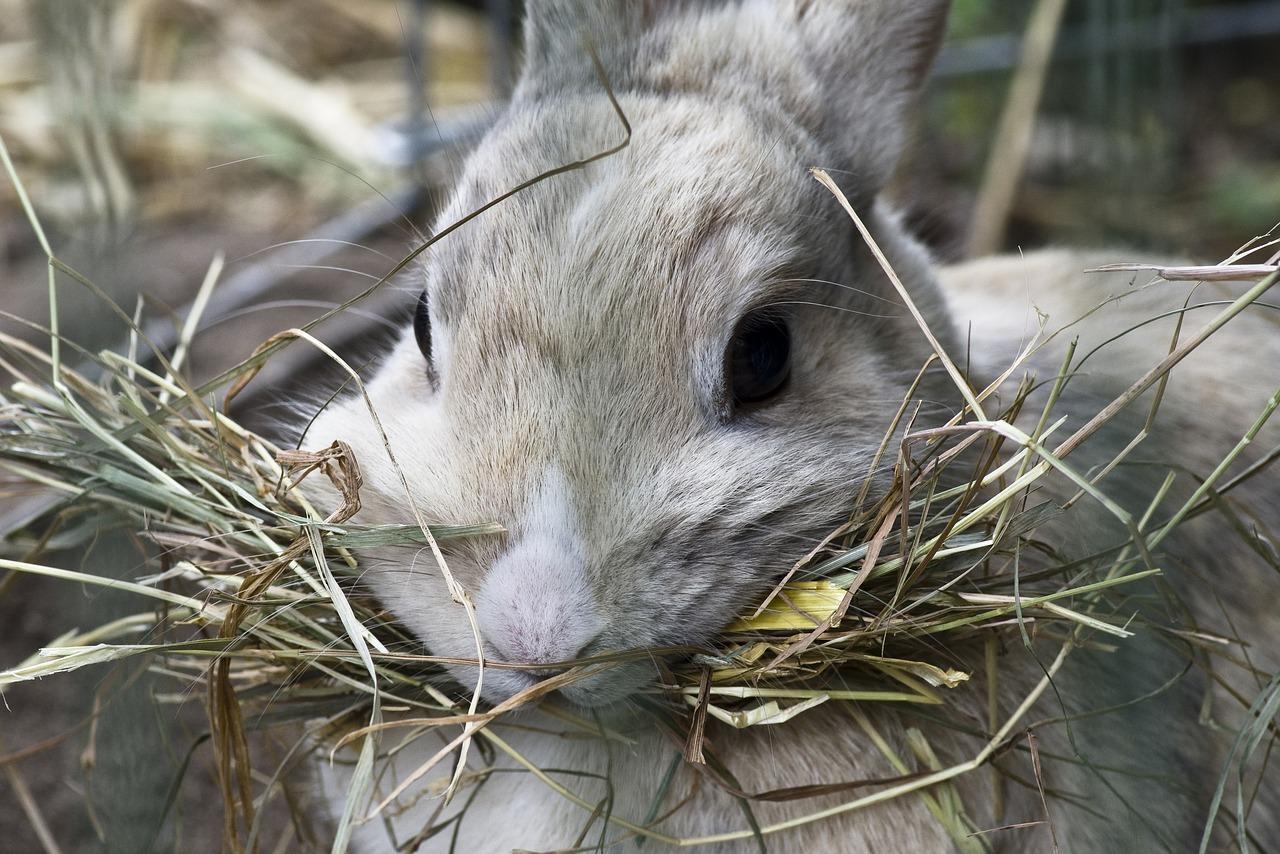 heno comida roedores