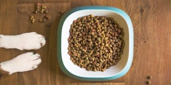 alimentación hipoalergénica para perros