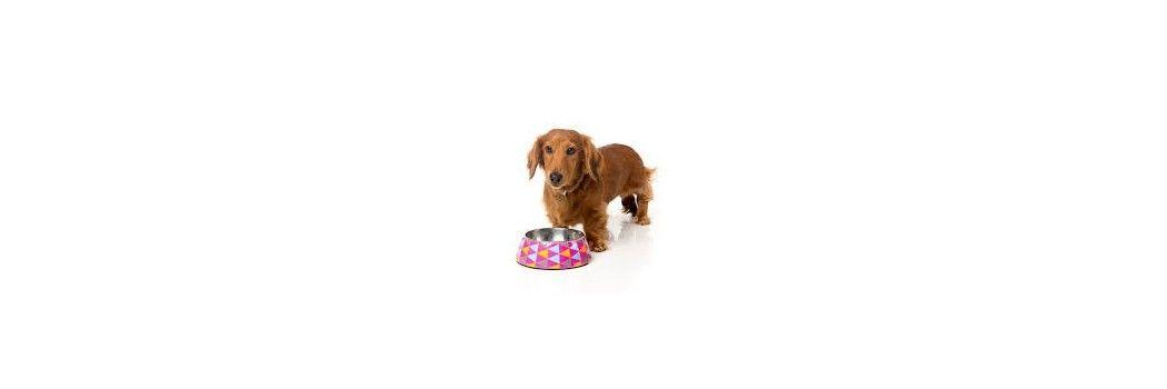 Comederos y bebederos para perros