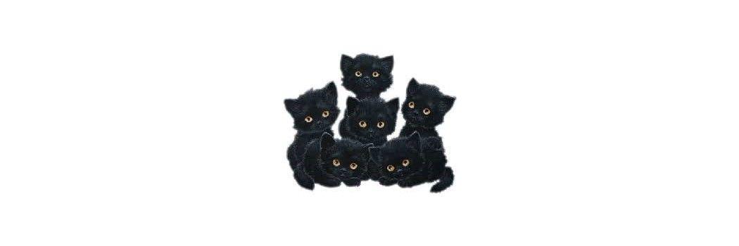 Comida y accesorios para gatos