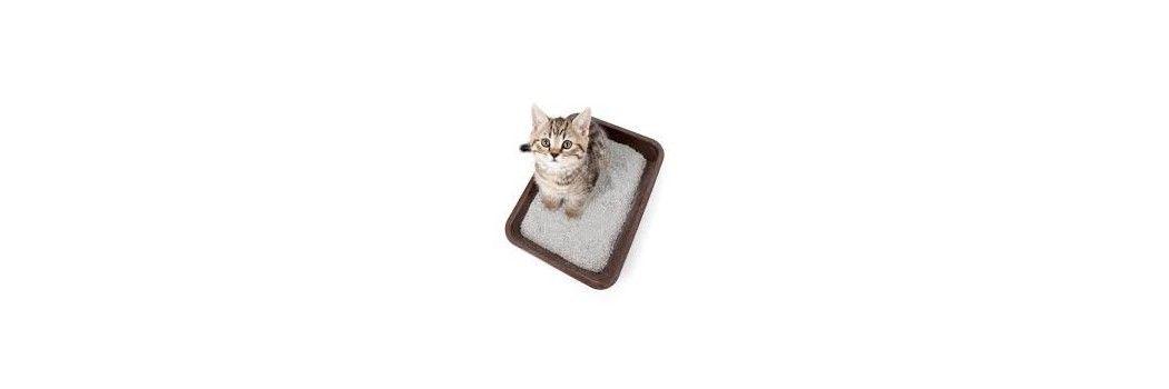 Arena aglomerante para gatos