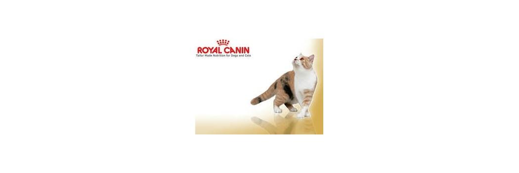 Pienso ROYAL CANIN para gatos