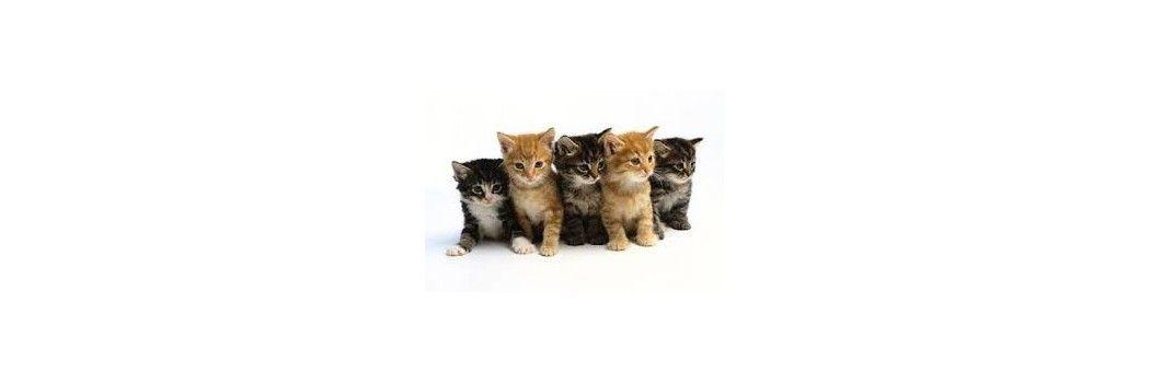 leche y comida para gatitos