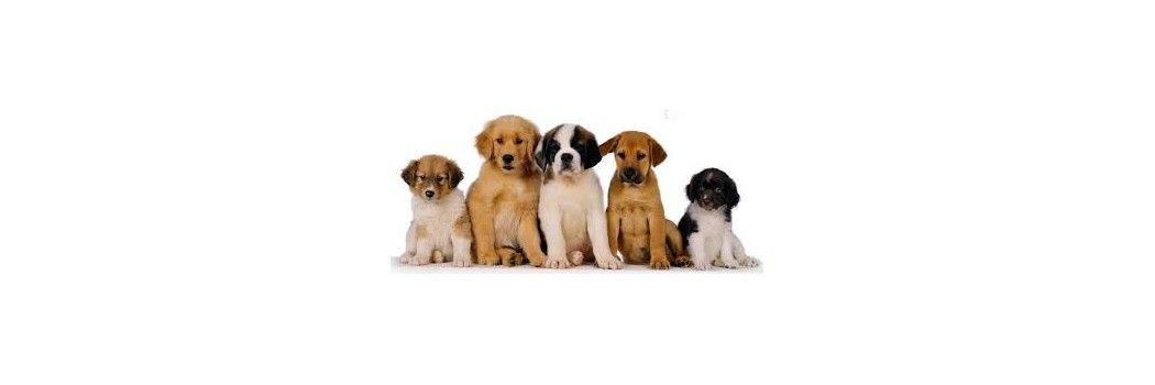 Pienso y comida para perros en oferta